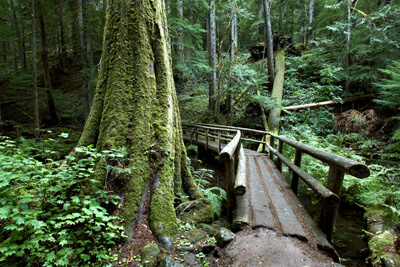 Lush forest along the McKenzie River Hiking Trail
